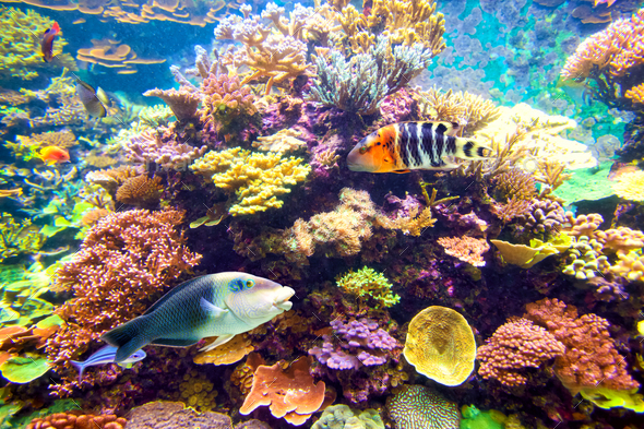 Tropical fish and coral reef - Stock Photo - Images