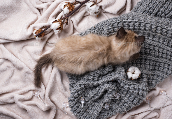 Little funny kitten on knitted plaid - Stock Photo - Images