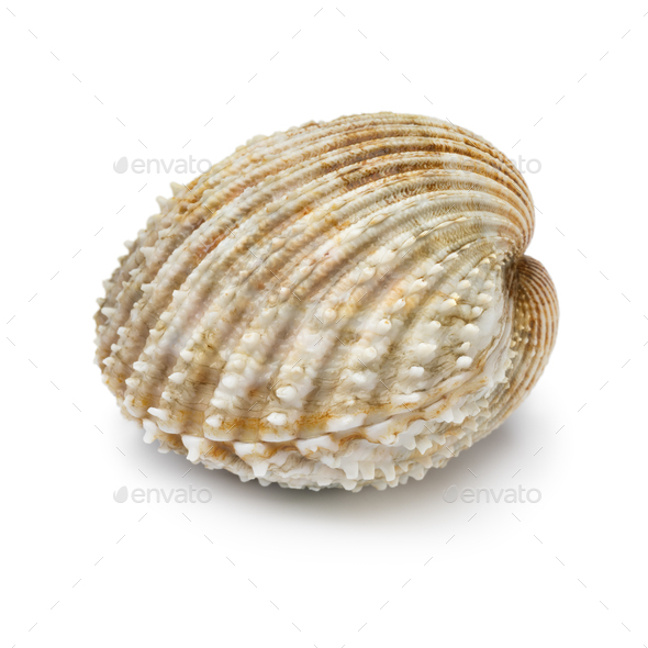 Whole fresh closed prickly cockle - Stock Photo - Images