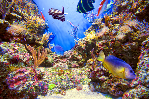 Underwater life landscape - Stock Photo - Images