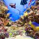 Underwater life landscape - PhotoDune Item for Sale
