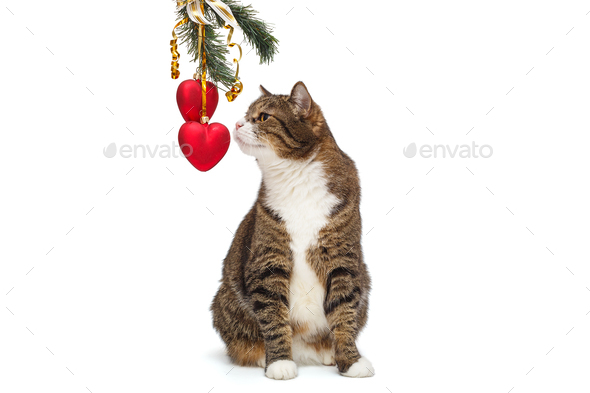 Grey cat and Christmas toys - Stock Photo - Images