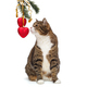 Grey cat and Christmas toys - PhotoDune Item for Sale