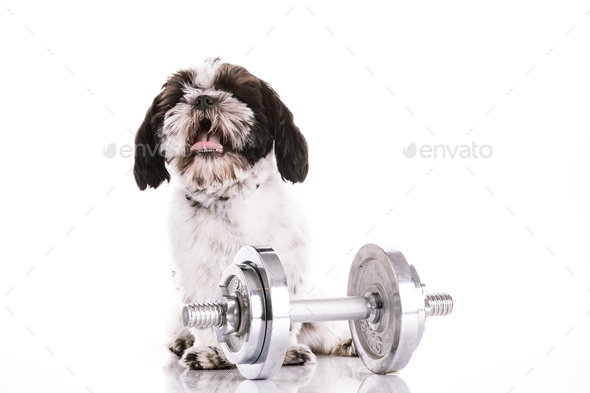 Adorable dog with dumbbells on white background - Stock Photo - Images