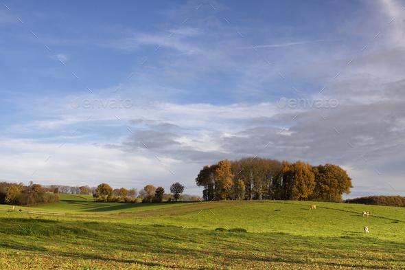 Landscape near Groesbeek - Stock Photo - Images