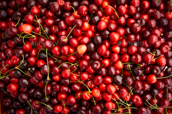 Red Cherries. pile of ripe cherries with stalks. - Stock Photo - Images