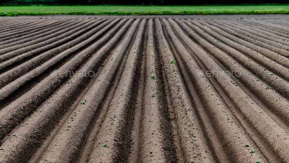 Ploughed field, springtime agricultural background - Stock Photo - Images
