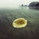 Sand dollar. Pacific coast - PhotoDune Item for Sale