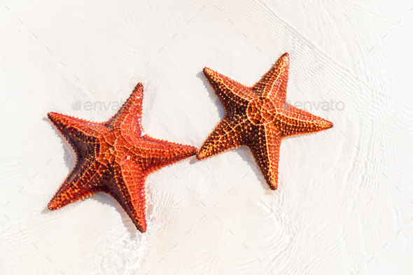 Tropical white sand with red starfishes - Stock Photo - Images