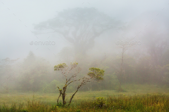 Foggy jungle - Stock Photo - Images