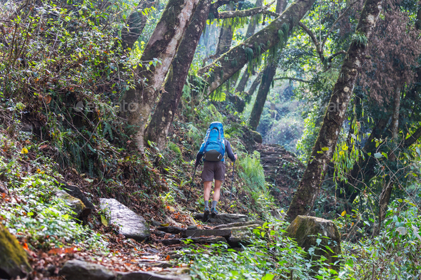 Hike in Nepal jungle - Stock Photo - Images