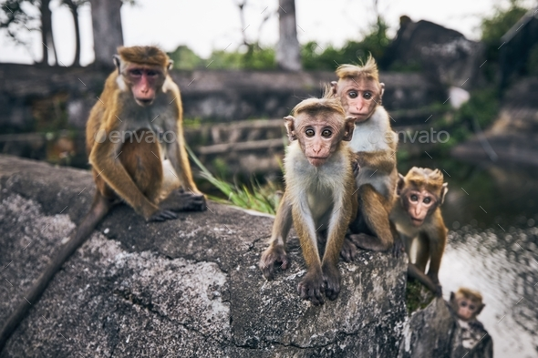 Group of cute monkeys - Stock Photo - Images