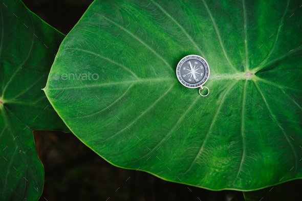 Orientation concept - Analogical Compass laying on the huge deep green colored lotus leaf - Stock Photo - Images