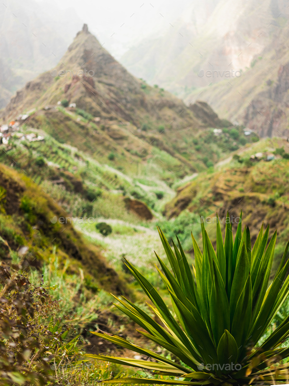 Agave plant with lombo de pico in Xo-xo valley in background. Trekking route 202 over Rabo Curto to - Stock Photo - Images