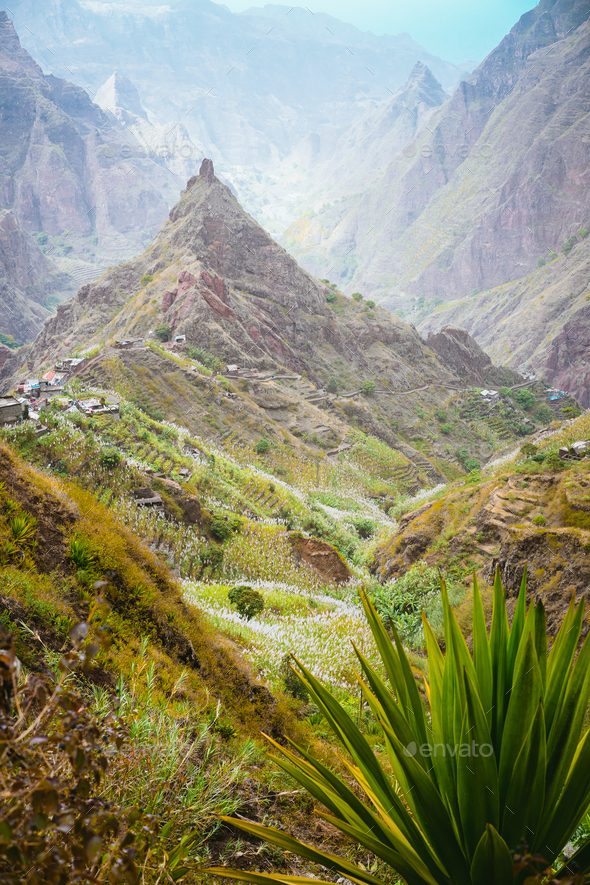 Yucca plants and sugar cane on trekking path way towards mountain peak of Xo-xo valley. Santo Antao - Stock Photo - Images