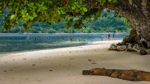 Huge Tree on Friwen Island, West Papuan, Raja Ampat, Indonesia - Stock Photo - Images