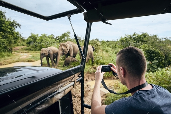 Photographing of group of elephants - Stock Photo - Images