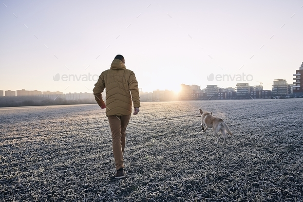 Frosty morning with dog - Stock Photo - Images