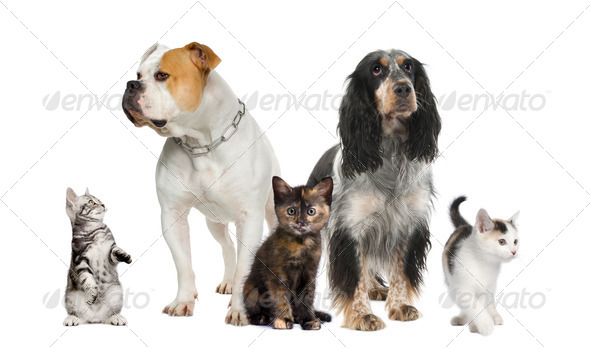Group of pets : dogs and cats - Stock Photo - Images
