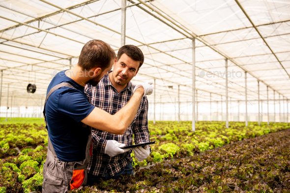 Two researchers discuss salad plants and gesticulate - Stock Photo - Images