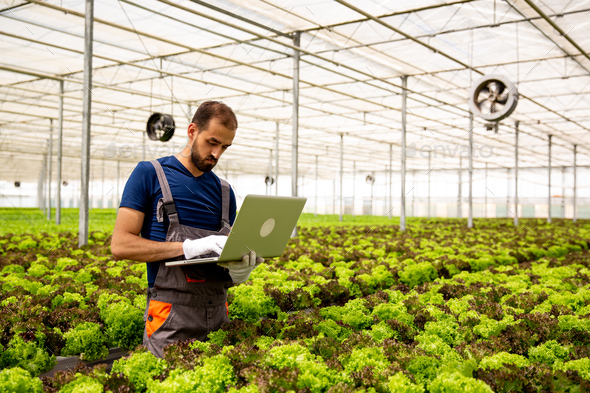 Caucasian worker noting something on the laptop in the salad plantation - Stock Photo - Images