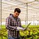 Farmer man types something in laptop while looking at salad plants - PhotoDune Item for Sale