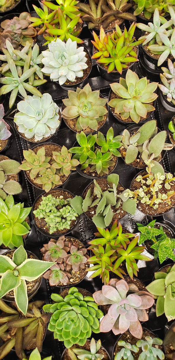 Abstract Overhead of Various Succulent Plants At Nursery - Stock Photo - Images