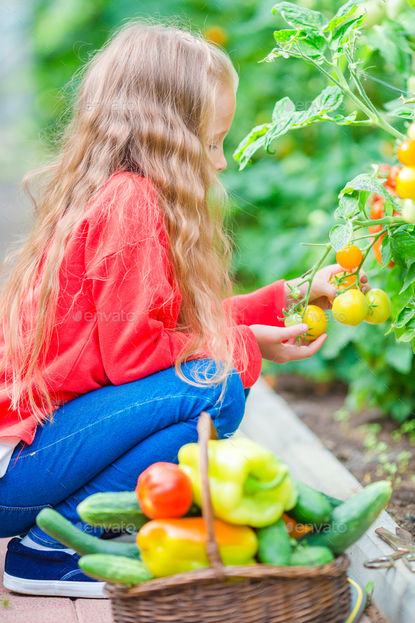 Adorable little girl harvesting cucumbers and tomatoes in greenhouse. Portrait of kid with red - Stock Photo - Images
