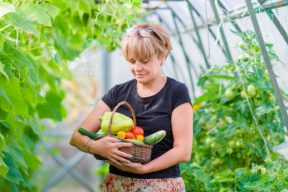 Woman with basket of greenery and vegetables in the greenhouse. Time to harvest - Stock Photo - Images