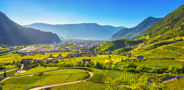 Vineyards view in Santa Maddalena Bolzano. Trentino Alto Adige Sud Tyrol, Italy. - Stock Photo - Images
