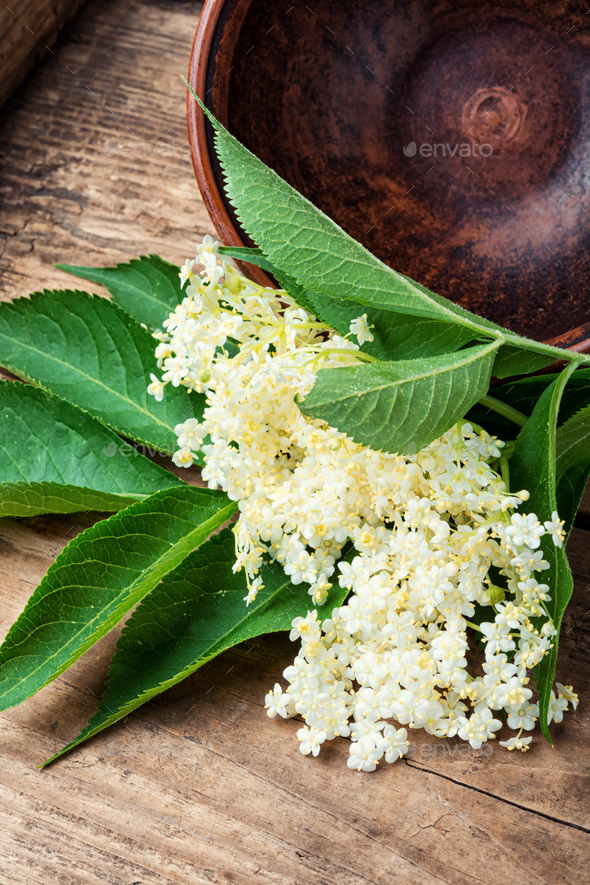 elderberry flowers - Stock Photo - Images