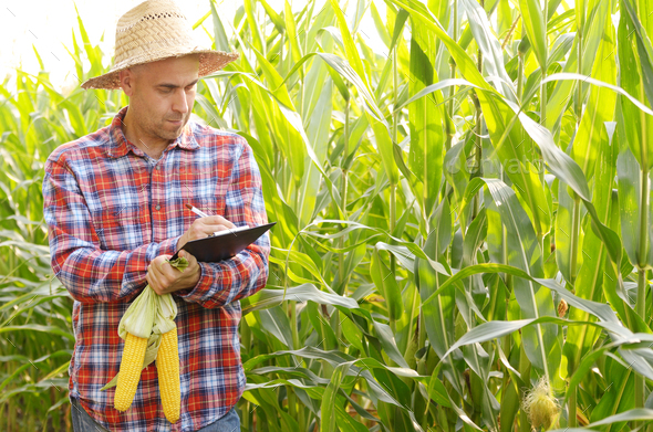 Farmer in straw hat with clipboard inspecting corn at field somewhere in Ukraine - Stock Photo - Images