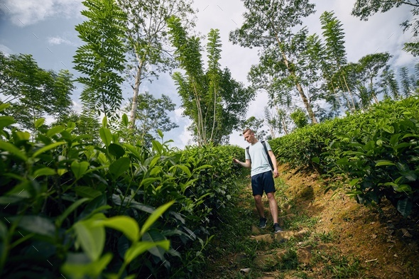 Traveler in tea plantation - Stock Photo - Images
