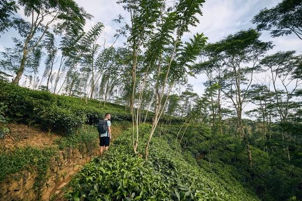 Traveler in tea plantation - Stock Photo - Images