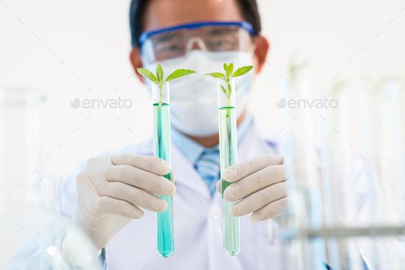 Testing GMO Plants - Stock Photo - Images