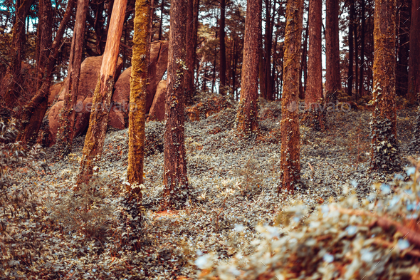 Detail of a wild forest in autumn - Stock Photo - Images