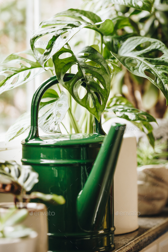 Potted green plants on window. Home decor and gardening concept. - Stock Photo - Images
