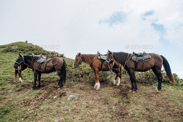 Horses are waiting for the owner in the mountains - Stock Photo - Images