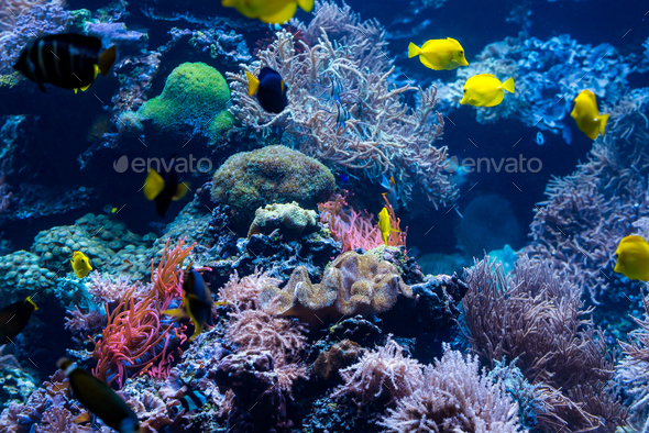 Underwater Scene With Coral Reef And Tropical Fish - Stock Photo - Images