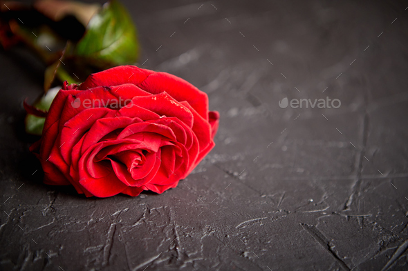 Fresh red rose flower on the white wooden table - Stock Photo - Images