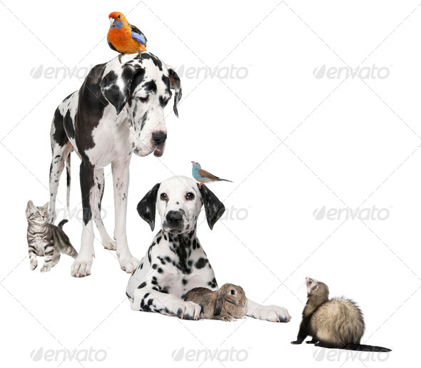 Group of pets : dog, bird, rabbit, cat and ferret - Stock Photo - Images