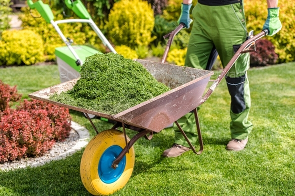 Removing Freshly Mown Grass - Stock Photo - Images