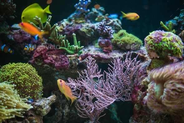 Tropical Fishes Hobby - Stock Photo - Images