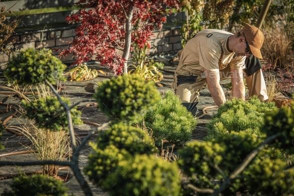 Backyard Garden Work - Stock Photo - Images
