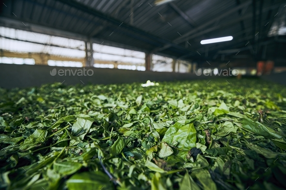 Production in tea factory - Stock Photo - Images