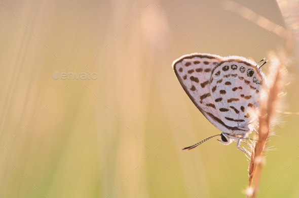 Butterfly perching on a grass stem - Stock Photo - Images