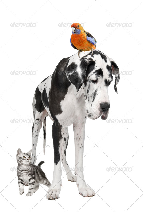 Group of pets : dog, bird, cat - Stock Photo - Images