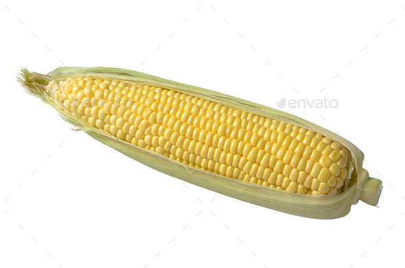 Organic sweet corn cob isolated on white background. Clipping path added - Stock Photo - Images