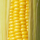 Ripe fresh organic sweet corncob with leaf closeup background - PhotoDune Item for Sale