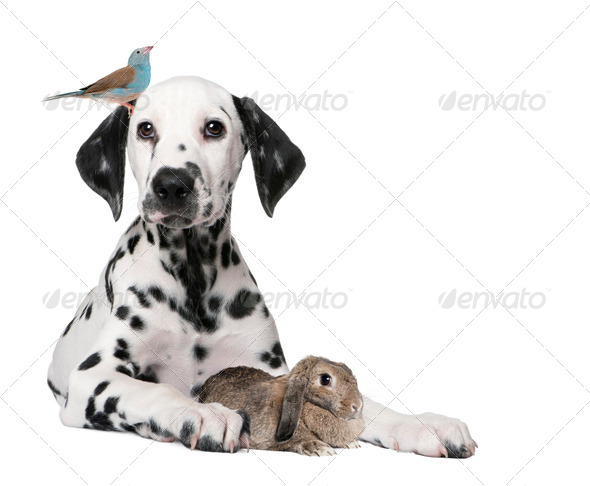 Group of pets : dog puppy, bird, rabbit - Stock Photo - Images